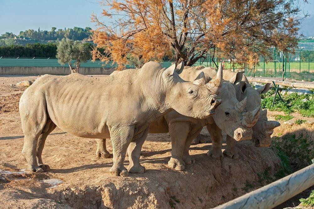 Зоопарк в Аттике