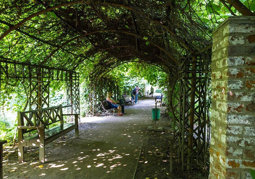 Ботанический сад - Аптекарский огород